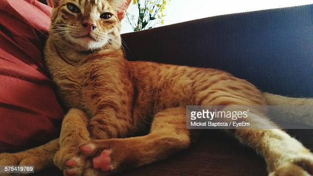 Close-Up Of Ginger Cat Relaxing On Sofa
