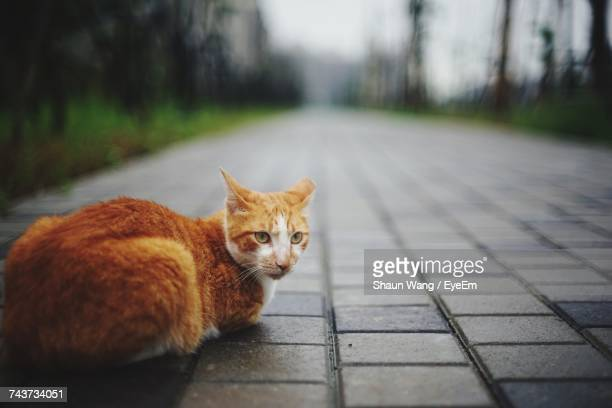 Close-Up Of Ginger Cat Sitting On Footpath