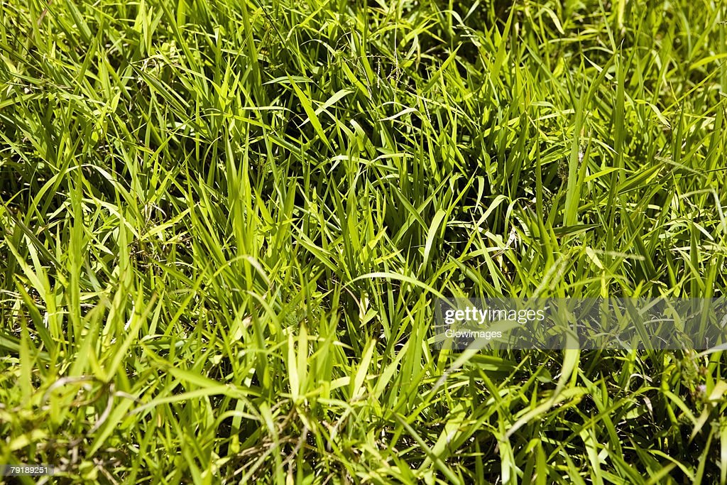 Close-up of grass in a park : Foto de stock
