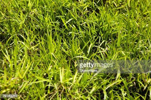 Close-up of grass in a park : Foto de stock