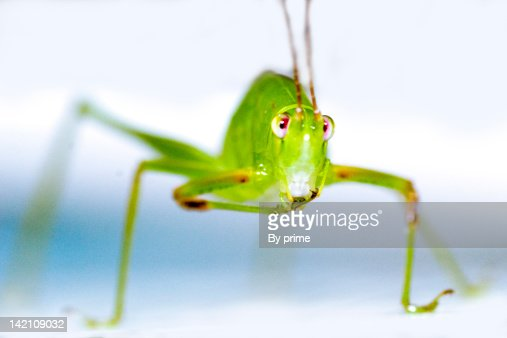 Close-up of grasshopper : Stock Photo
