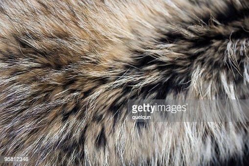 Close-up of gray black brown luxury animal fur