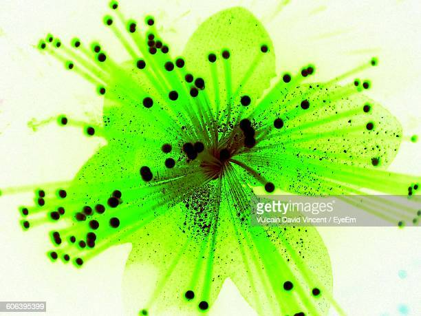 Close-Up Of Green Artificial Flower Against White Background