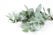 Closeup of green eucalyptus leaves branches on white table background. Floral composition, feminine styled stock image, selective focus.