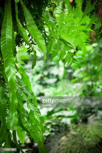 Close-Up di verde lussureggiante vegetazione della giungla le foglie e gli altri