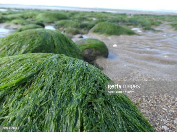 Close-Up Of Green Leaf On Beach