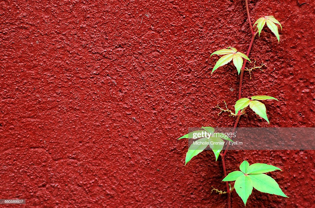 Close-Up Of Green Leaves Against Red Wall