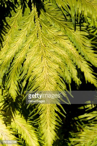 Close-up of green leaves in a botanical garden, Hawaii Tropical Botanical Garden, Hilo, Big Island, Hawaii Islands, USA : Foto de stock