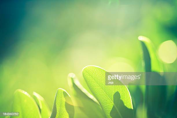 A close-up of green leaves in nature
