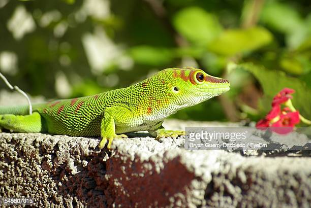 Close-Up Of Green Lizard On Wall