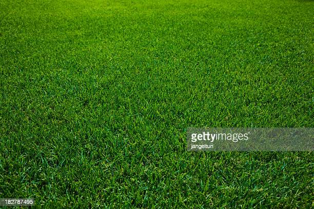 Close-up of green mowed lawn under a shadow