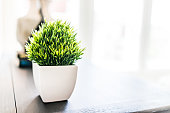 Closeup of green plant in small white ceramic flowerpot on table in minimalist staged model house interior with bright light from window