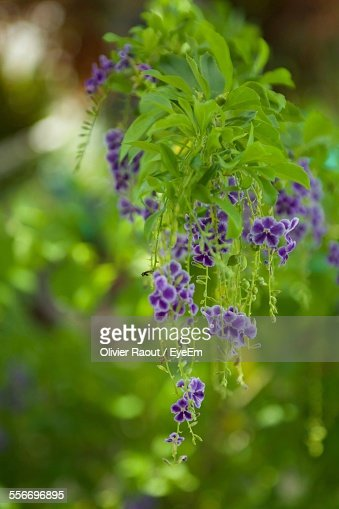 closeup of green plant with tiny purple flowers stock photo, Beautiful flower