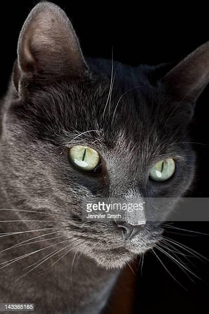 Close-up of grey cat