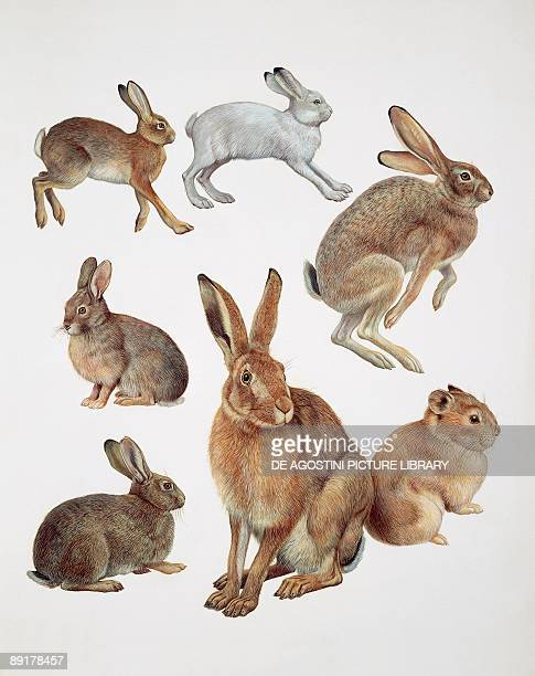 Closeup of group of leporidae mammals
