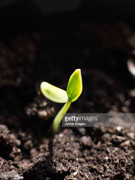 Close-up of growing seedling