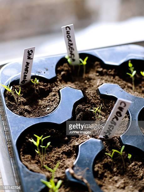 Close-up of growing seedlings