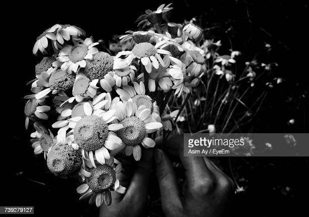 Close-Up Of Hand Holding Flowers Against Black Background