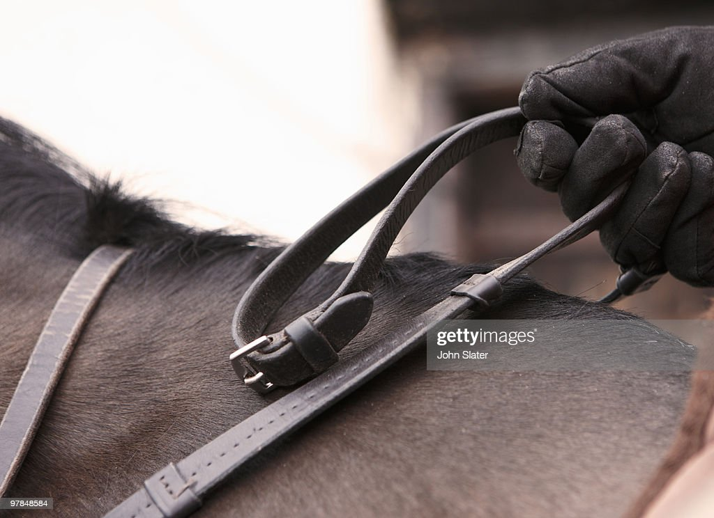 close-up of hand holding reins of horse : Stock Photo
