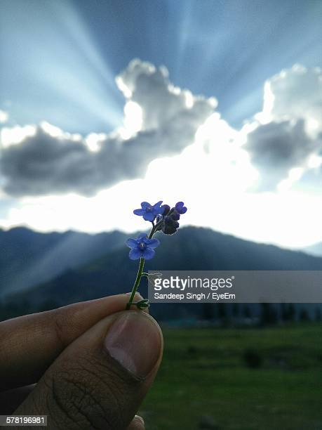 Close-Up Of Hand Holding Small Blue Flowers