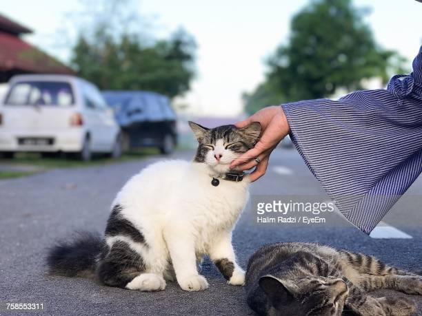 Close-Up Of Hand Stroking Cat