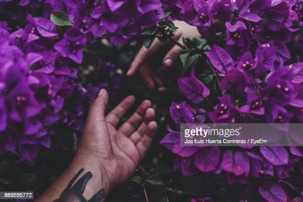 Close-Up Of Hands Amidst Purple Flowers