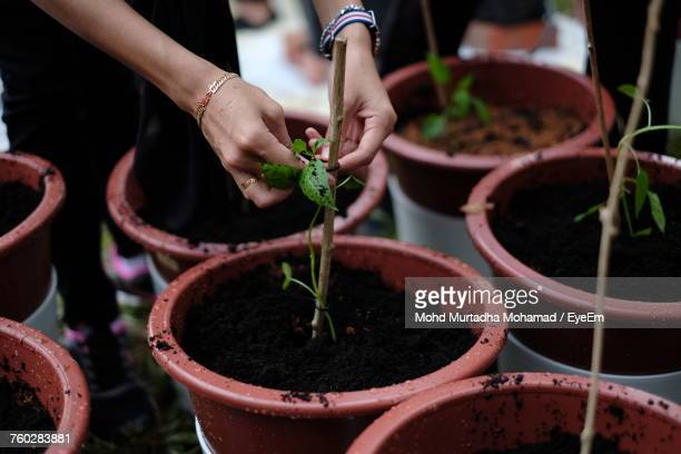 Close-Up Of Hands Potting Plant