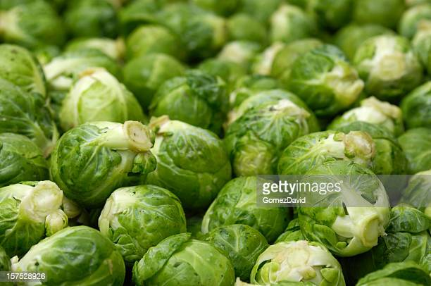 Close-up of Harvested Brussels Sprouts