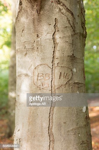 Close-up of heart shape on tree trunk