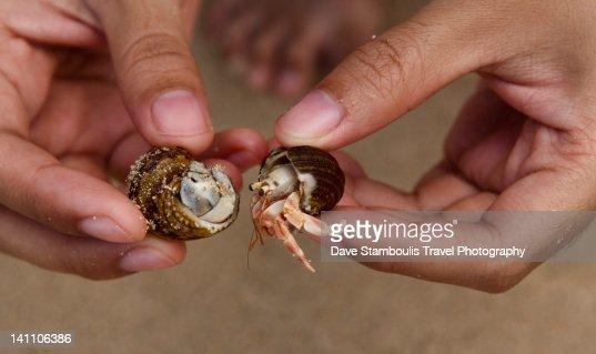 Closeup of hermit crab (Pagurus bernhardus)