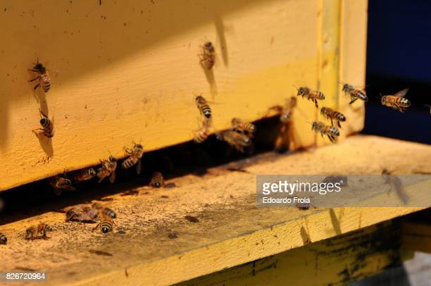 Close-Up Of Honey Bees Entering Beehive