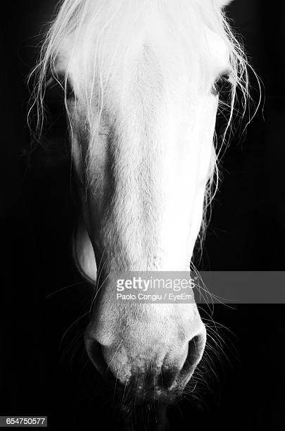 Close-Up Of Horse Against Black Background