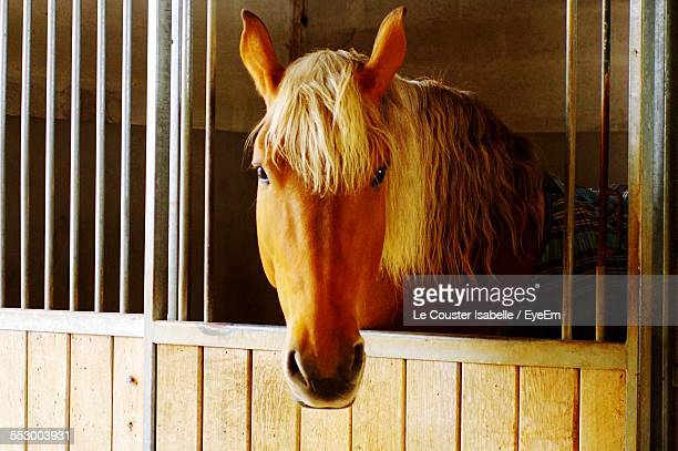 Close-Up Of Horse In Animal Pen