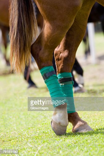 Close-up of horse legs wrapped with bandages : Foto de stock
