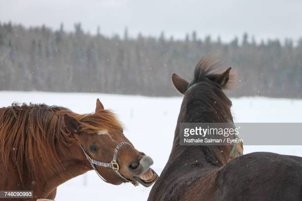 Close-Up Of Horse On Snow Field