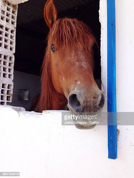 Close-Up Of Horse Peeking From Animal Pen
