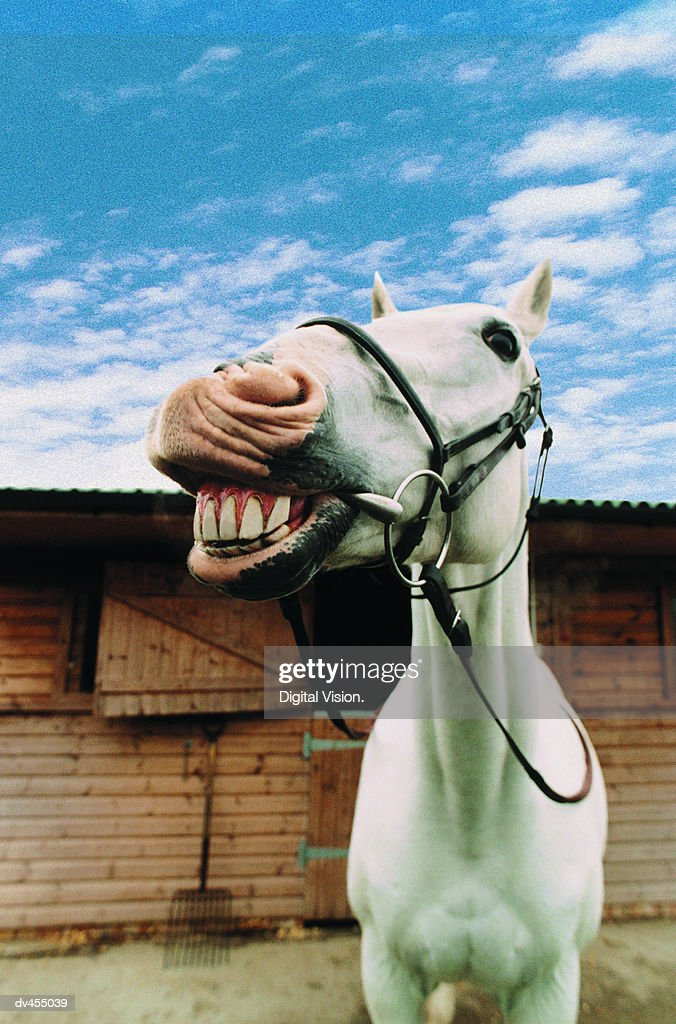 Close-up of Horse with Mouth Open : Stock Photo