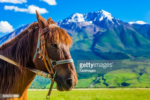 Close-up of  horse's head in mountains and fields/Qinghai,China. : Stock Photo