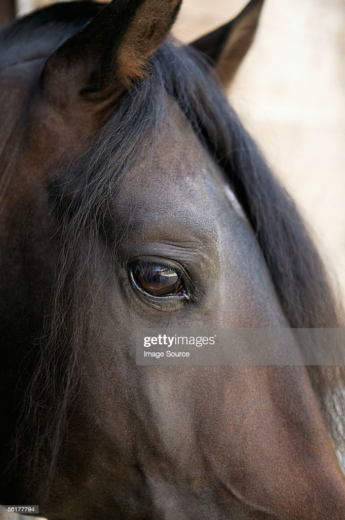 Close-up of horse's head : Stock Photo
