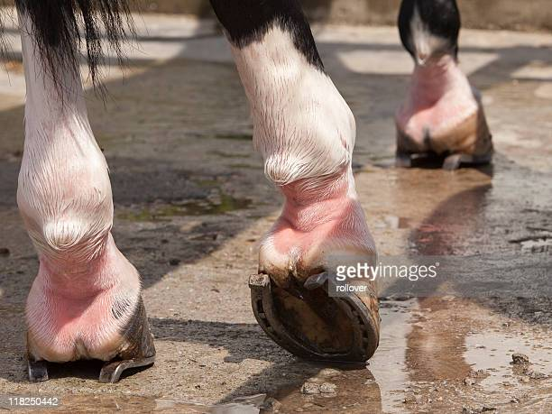 Close-up of horses legs