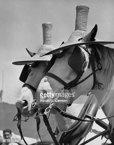 Close-Up Of Horses  : Stock Photo