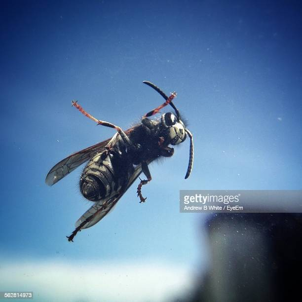 Close-Up Of Housefly On Glass Window Against Sky