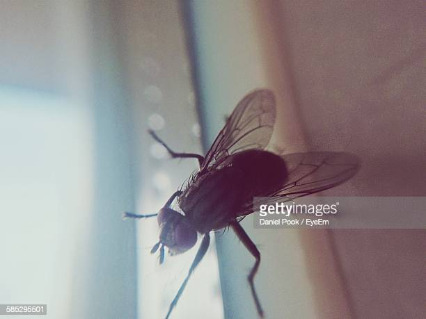 Close-Up Of Housefly On Window Sill