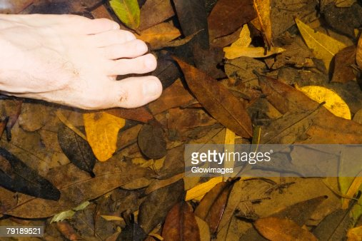 Close-up of human feet on dried leaves : Foto de stock