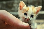 Close-Up Of Human Hand Holding Kitten