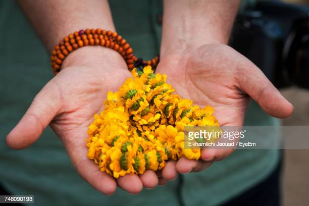 Close-Up Of Human Hand Holding Yellow Flower