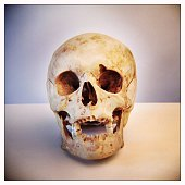 Close-Up Of Human Skull On Table Against Colored Background