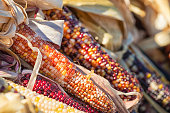Closeup of Indian Corn in autumn, shallow depth of field.