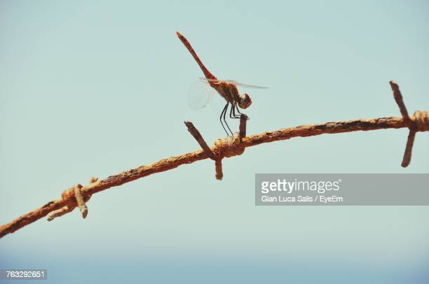 Close-Up Of Insect Perching On Wire