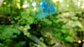 Close-Up Of Insects On Spider Web By Plants